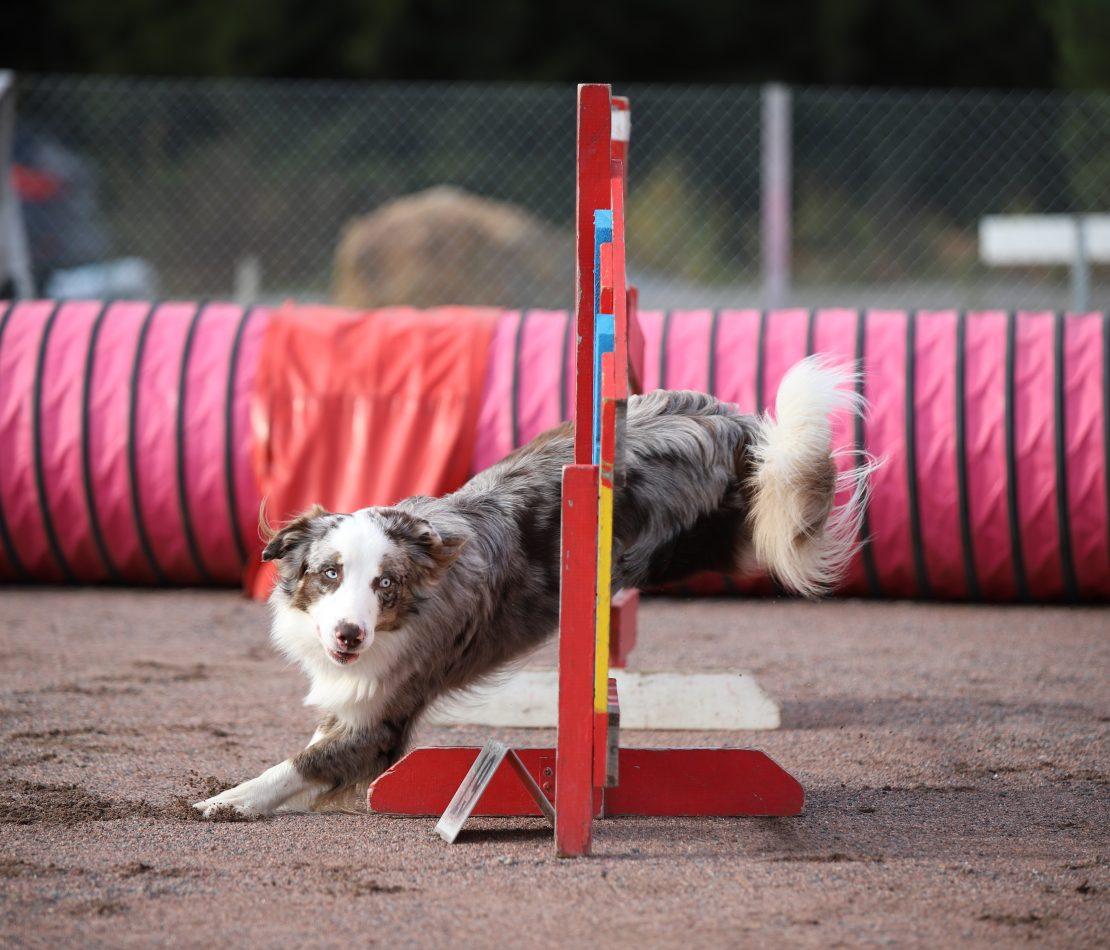 Kiri jumping
